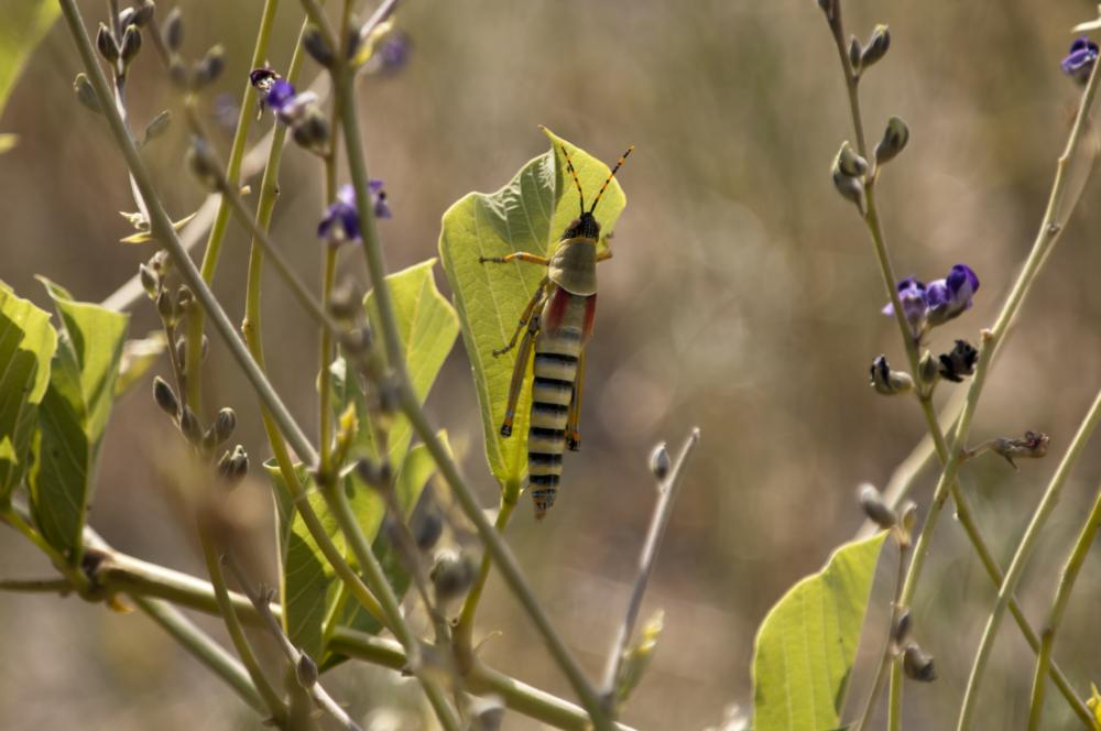 hhnielsen-cat5grasshopper