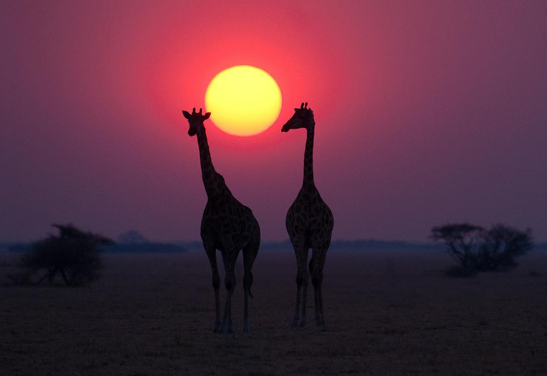 CWinterbach.Cat5_NxaiPan_Giraffe.100405-Nxai