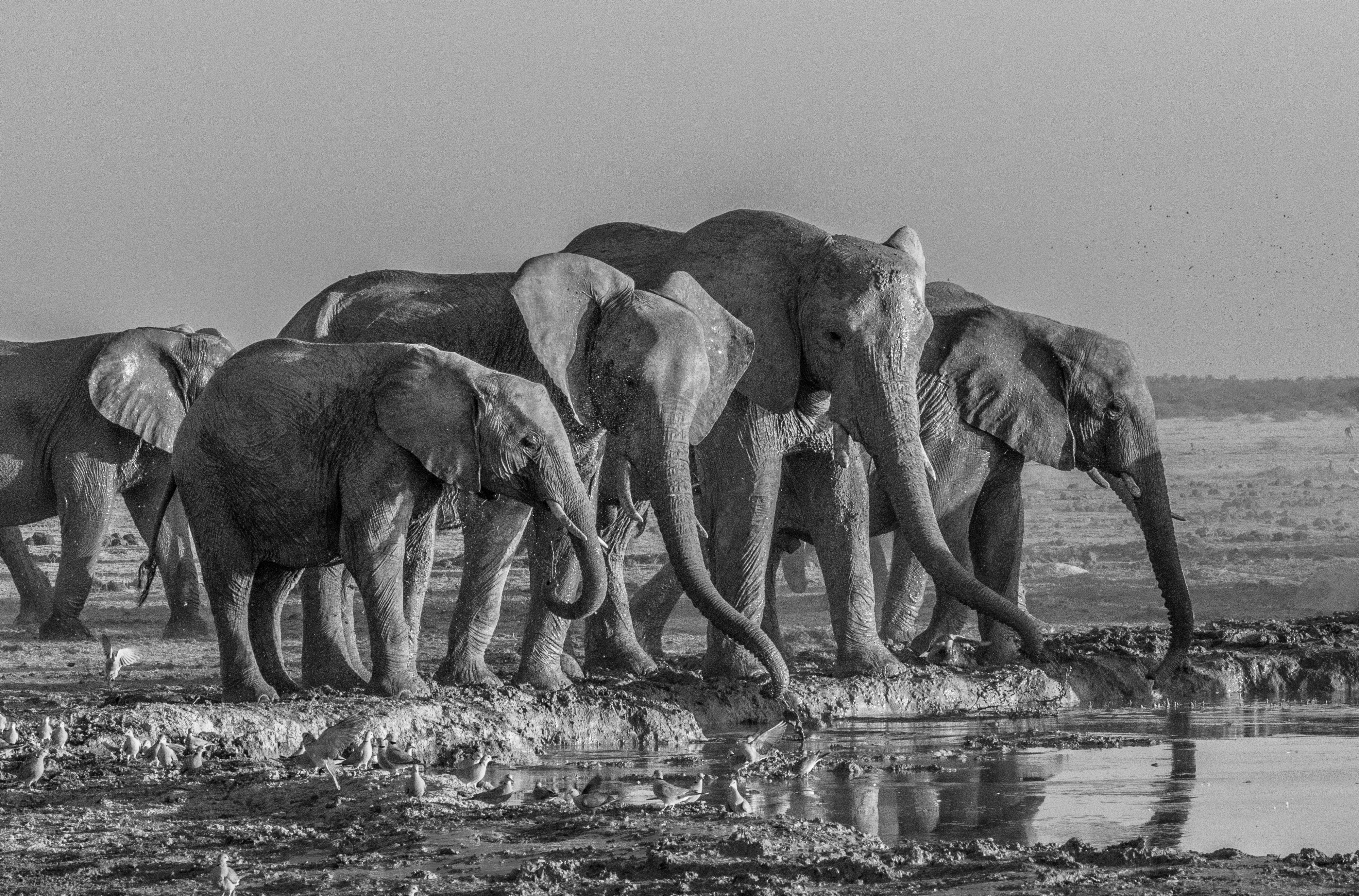 jvarley.Cat5 Elephant at waterhole