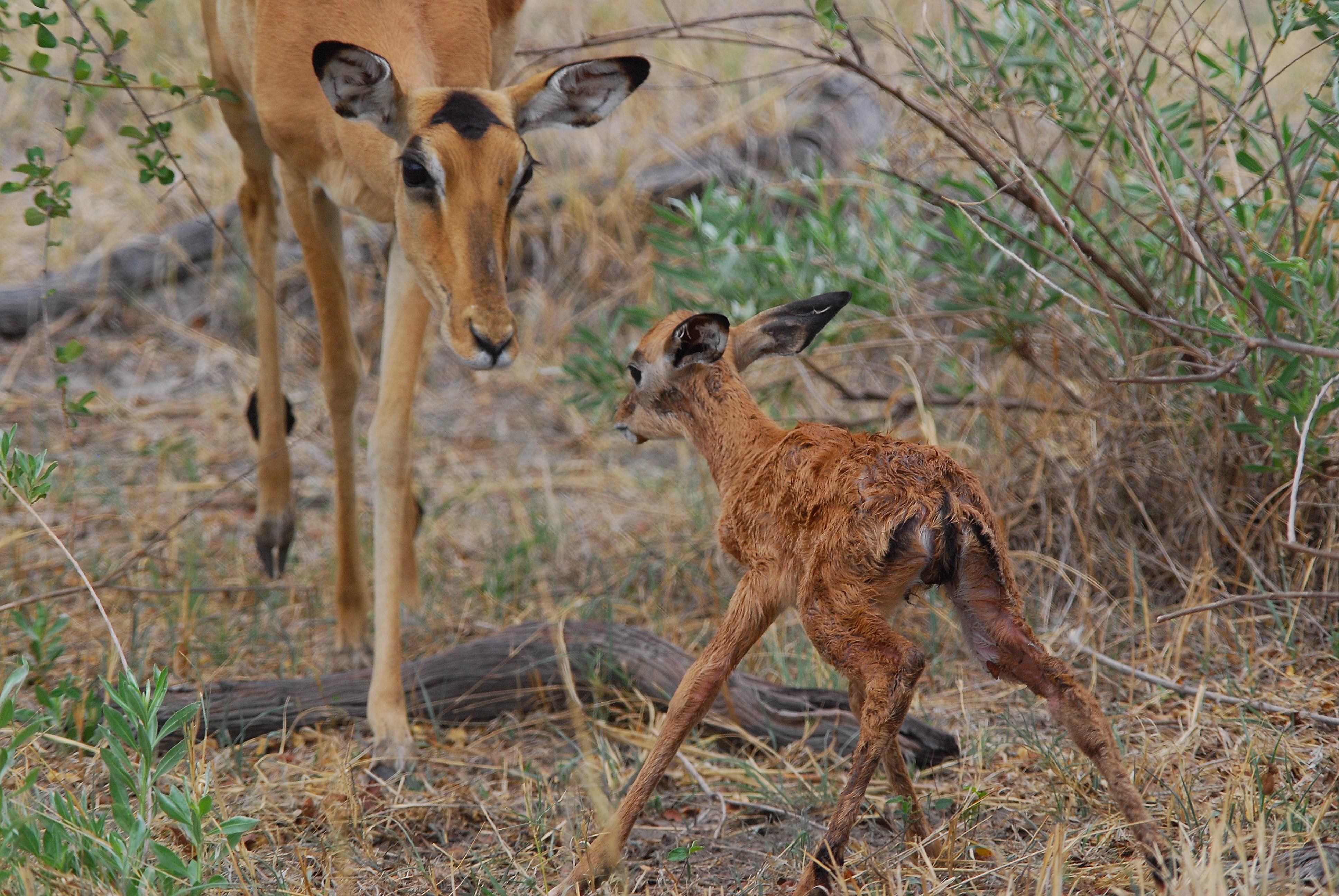 YHernandez.new life.impala1 kwara