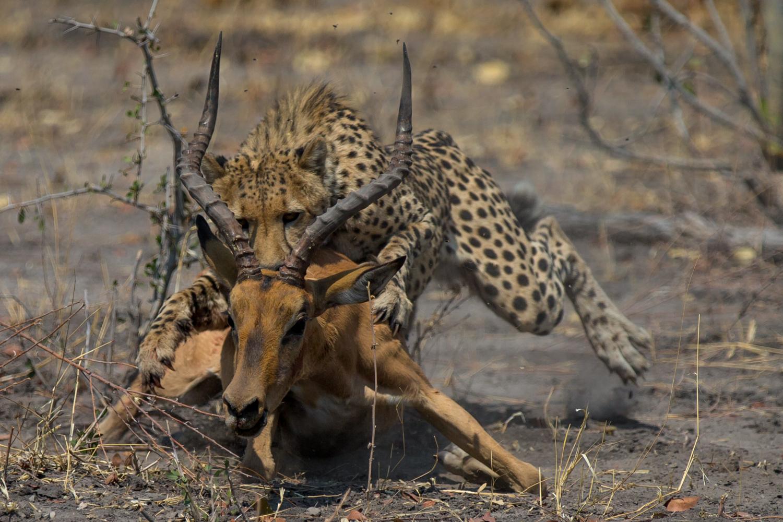 DGUTOSKI.CAT4   IMALA TAKE DOWN DUX@LAGOON